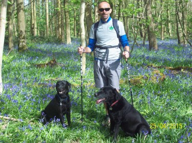Nordic walking through bluebells