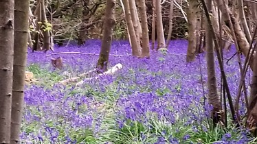 Nordic Walking through the Bluebells, Stanmer Woods, Brighton - 22 April 2017